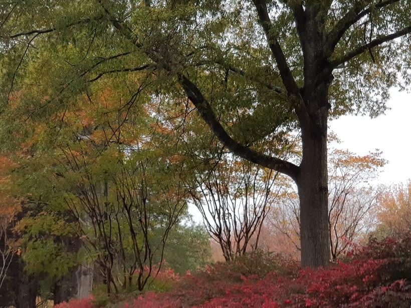 Seccion de Fotos de paisajes naturales 1