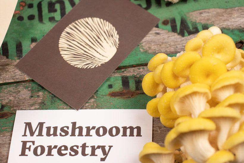 Mushroom Forestry (Logotipo) 4