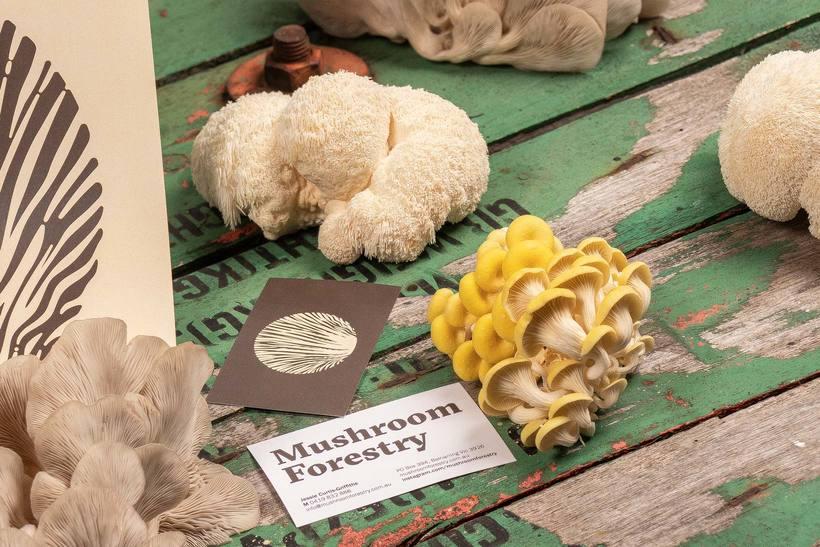 Mushroom Forestry (Logotipo) 10