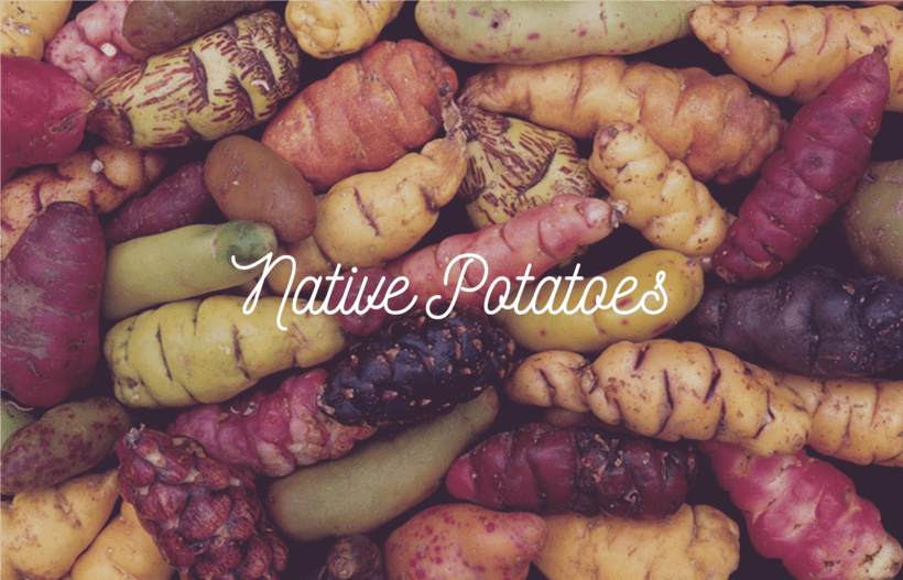 edible tubers vegetables - 800×535