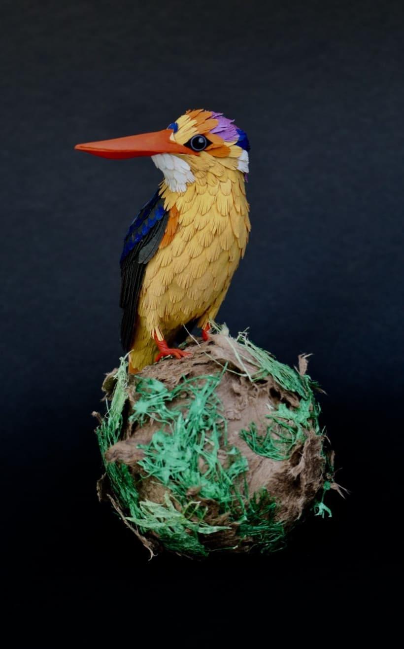 Martín pescador oriental enano (proyecto personal)  -1