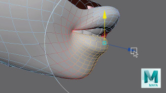 Course 4 – Correct Topology for Animation